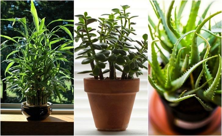 Di huisplante werk welstandwelstand for Tall indoor plants low maintenance