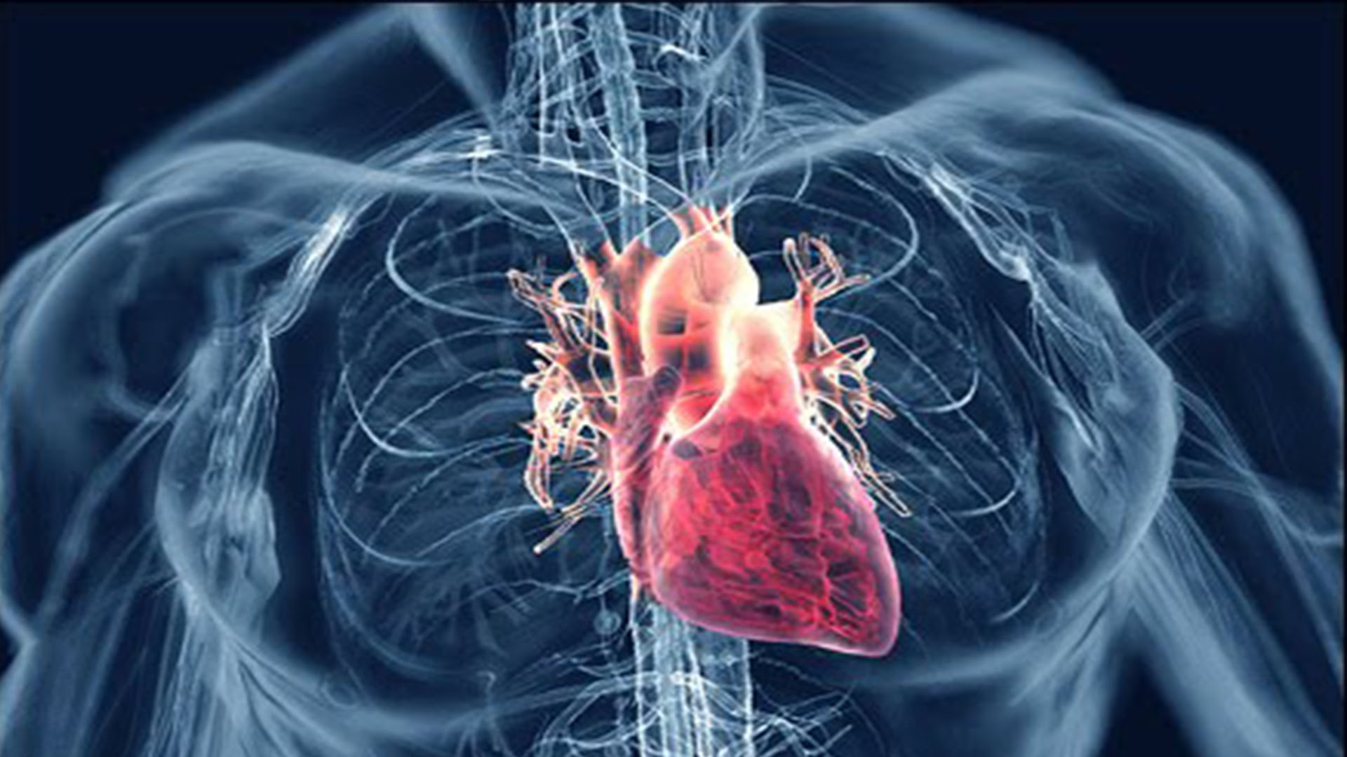 an analysis of the topic of the hypertension and the heart beats The interplay between sympathetic overactivity, hypertension and  arterial pressure has been a topic of many  spectral analysis of heart rate.